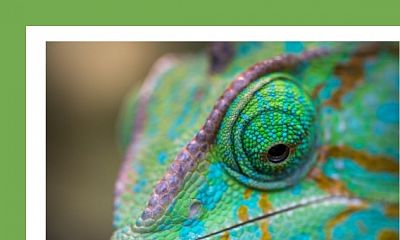 Become a Chameleon: Five Traits You Will Definitely Need in the Future
